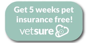 Get 5 weeks pet insurance free from Vetsure