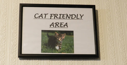 CatsOnly2