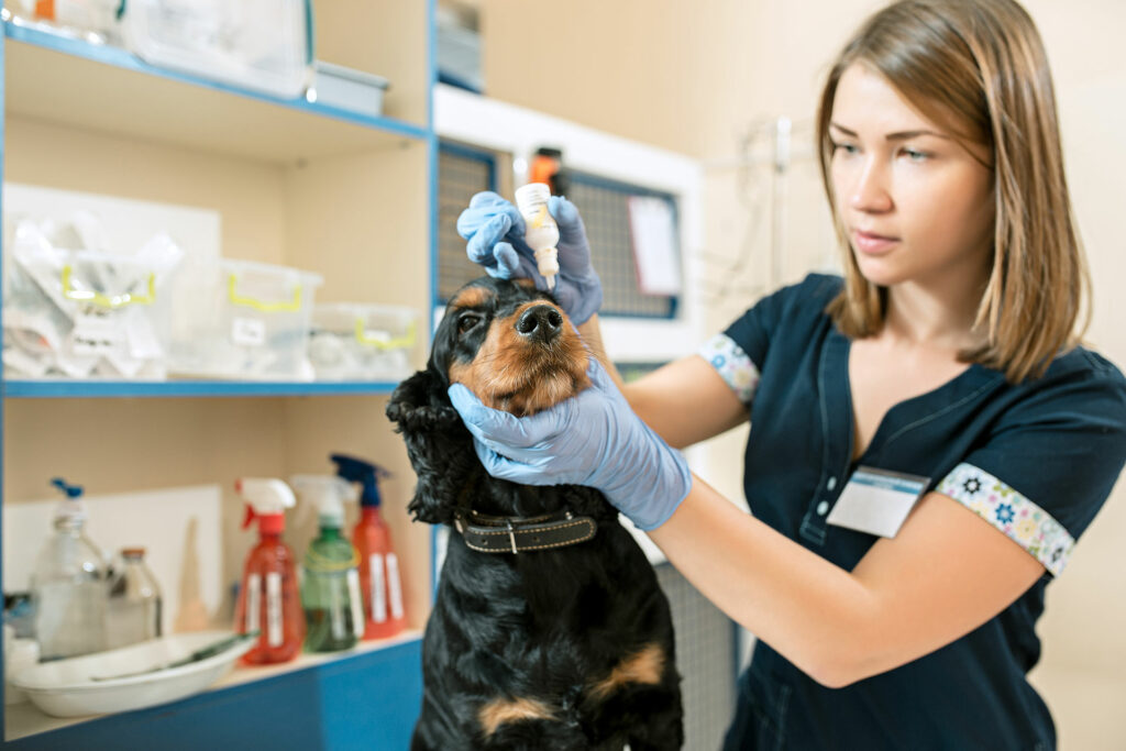 Shrubbery Veterinary Group - Veterinary Nurse giving medication to a dog